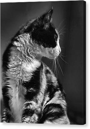 Black And White Cat In Profile  Canvas Print by Jennie Marie Schell