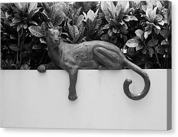 Black And White Cat Canvas Print by Rob Hans