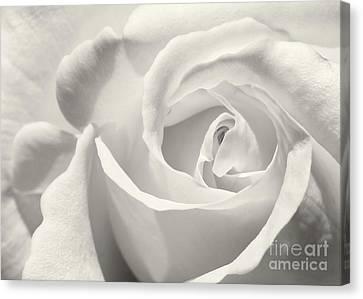 Black And White Curves Canvas Print by Sabrina L Ryan