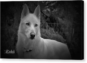 Black And White Dog Portrait Canvas Print