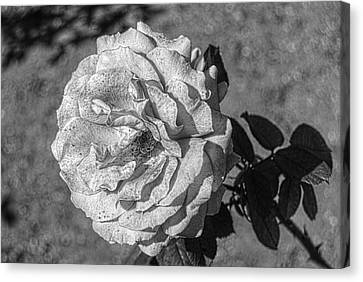 Black And White Flower #2 Canvas Print