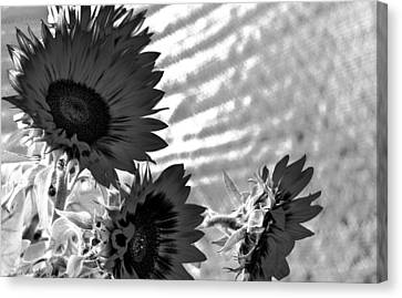Black And White Flower Of The Sun Canvas Print