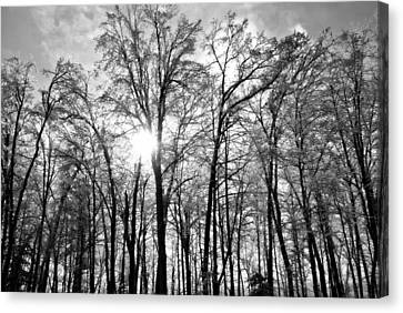 Black And White Forest Canvas Print by Dawdy Imagery