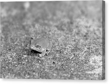 Black And White Frogger Canvas Print