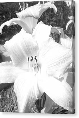 Canvas Print featuring the photograph Black And White Hibiscus  By Saribelle Rodriguez by Saribelle Rodriguez