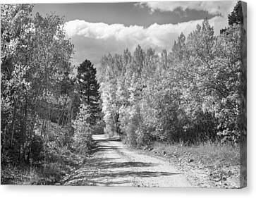 Black And White High Elevation Rocky Mountain 4 Wheeling Dirt Ro Canvas Print by James BO  Insogna