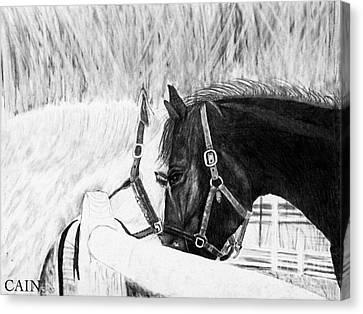 Black And White Horses Art Print Canvas Print