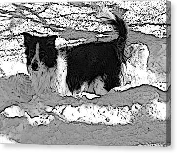 Canvas Print featuring the photograph Black And White In Snow by Michael Porchik