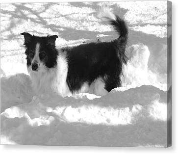 Canvas Print featuring the photograph Black And White In The Snow by Michael Porchik