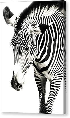 Black And White Canvas Print by Jenny Rainbow