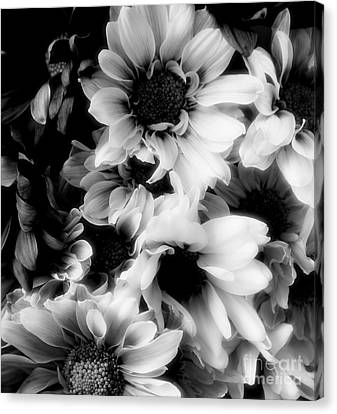 Black And White Canvas Print by Kathleen Struckle