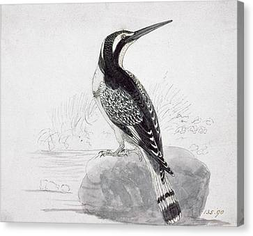 Black And White Kingfisher Canvas Print by Thomas Bewick