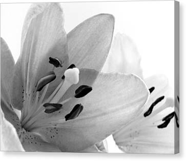 Black And White Lilies Canvas Print by Marianna Mills