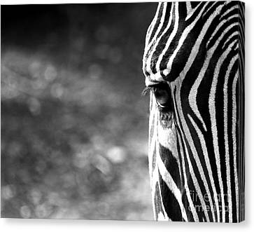 Black And White On Black And White Canvas Print
