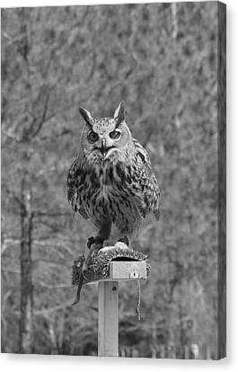 Black And White Owl Canvas Print by Cherie Haines
