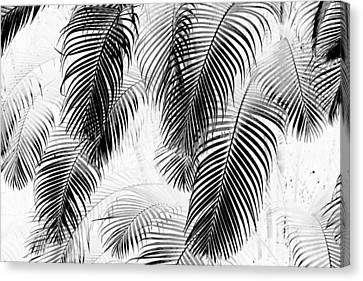 Black And White Palm Fronds Canvas Print by Karon Melillo DeVega