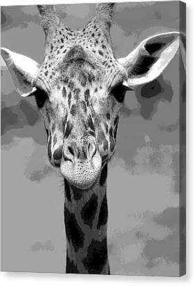 Black And White Peek A Boo Giraffe Canvas Print by Dan Sproul