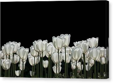Black And White Canvas Print by Peter Lloyd