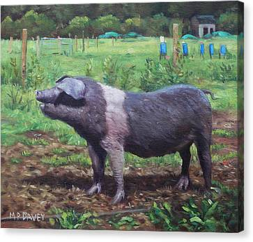 Black And White Pig On Farm Canvas Print by Martin Davey