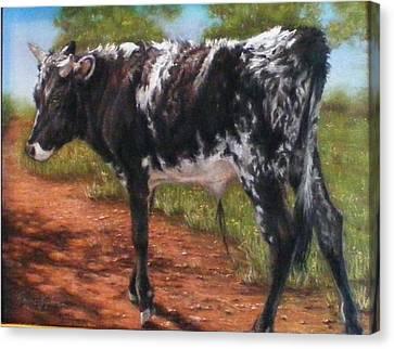 Black And White Shorthorn Steer Canvas Print