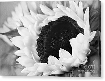 Black And White Sunflower Canvas Print by Eden Baed