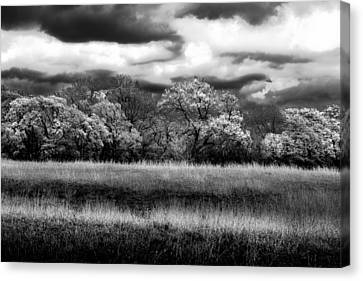Canvas Print featuring the photograph Black And White Trees by Darryl Dalton