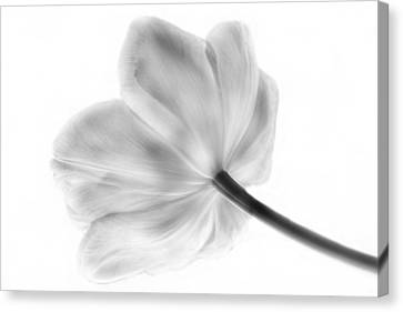 Black And White Tulip Canvas Print by Arlene Carmel