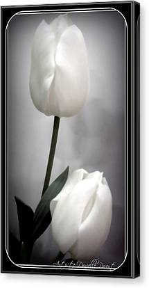Black And White Tulips  Canvas Print by Danielle  Parent