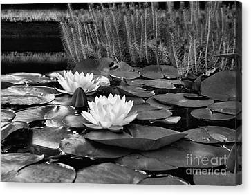 Black And White Version Canvas Print