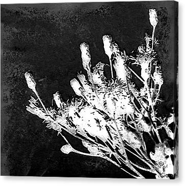 Canvas Print featuring the photograph Black And White Wildflower by Shawna Rowe