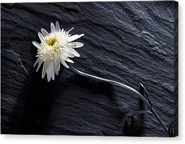 Canvas Print featuring the photograph Black And White With Yellow by Trevor Chriss