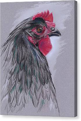 Black Australorp Hen Canvas Print
