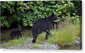 Black Bear And Cub Canvas Print