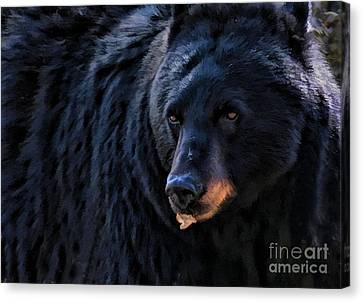 Black Bear Canvas Print by Clare VanderVeen