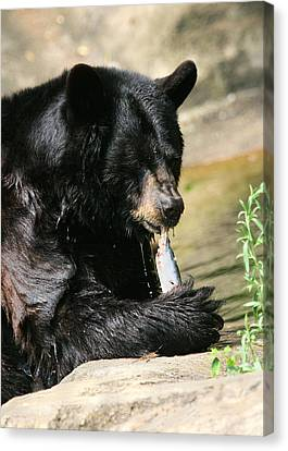 Pittsburgh Zoo Canvas Print - Black Bear Fish Catch by Angela Rath