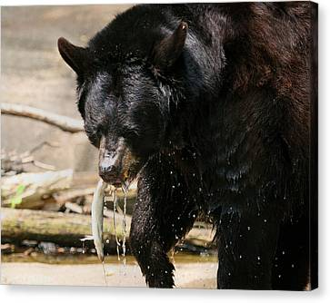 Pittsburgh Zoo Canvas Print - Black Bear Hunting by Angela Rath