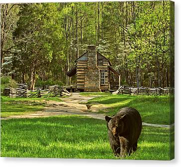 Black Bear Wandering II Canvas Print by TnBackroadsPhotos