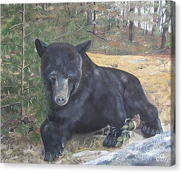 Black Bear - Wildlife Art -scruffy Canvas Print