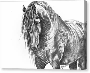 Black Beauty Canvas Print by Robyn Green