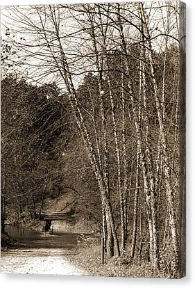 Black Birches, Zoo Park National Zoological Park Canvas Print by Litz Collection