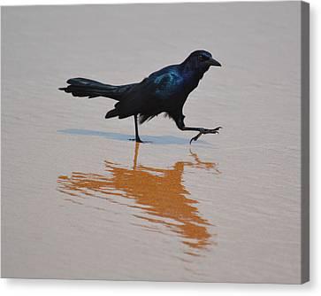 Black Bird - Strutting At The Beach Canvas Print