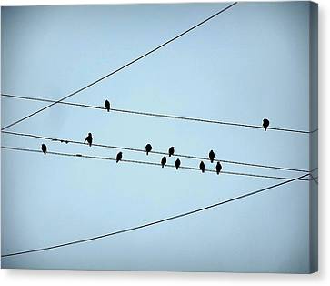 Black Birds Waiting In Blue Canvas Print