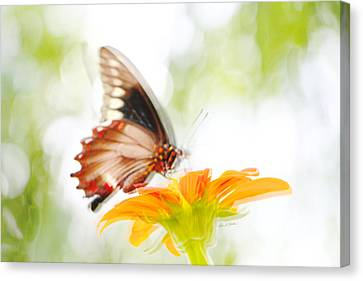 Butterfly In Motion Canvas Print - Black Butterfly In Motion I by Olivia Novak