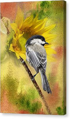 Black Capped Chickadee Checking Out The Sunflowers Canvas Print