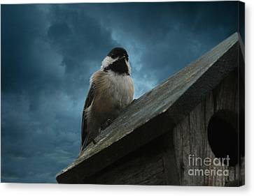 Black-capped Chickadee  Canvas Print by Marjorie Imbeau