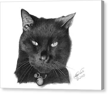 Black Cat - 008 Canvas Print by Abbey Noelle