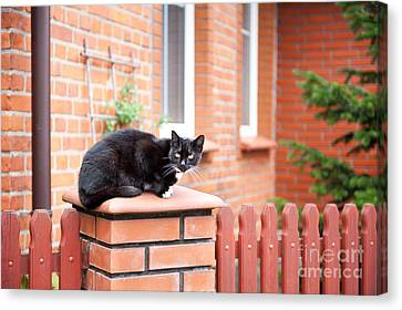 One Lonely Stray Black Cat Sitting On Fence  Canvas Print by Arletta Cwalina