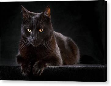 Black Cat Canvas Print by Dirk Ercken