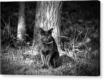 Canvas Print featuring the photograph Black Cat by Jerome Lynch