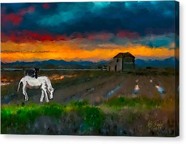 Canvas Print featuring the photograph Black Cat On A White Horse by Juan Carlos Ferro Duque